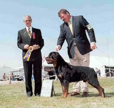 Sun Valley Dogs Champion Rottweilers
